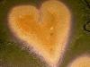le-coeur-de-voh